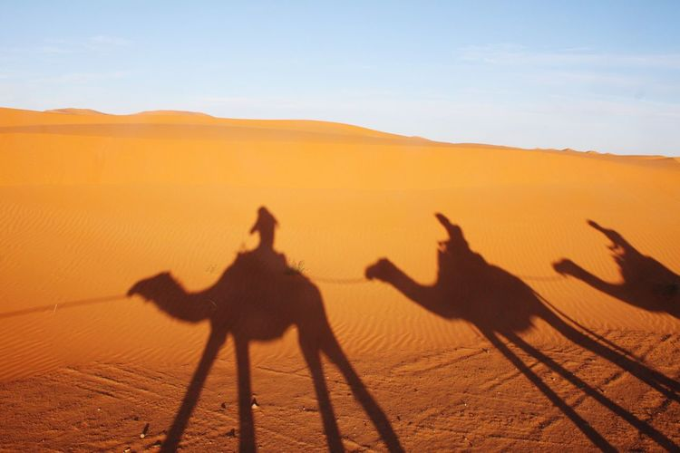 Shadow of people riding camels seen on sand in desert