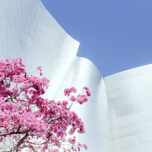Architectural Detail Architecture Architecture_collection Blossom Your Design Story Branch Change Cherry Blossom Cherry Tree Clear Sky Day Design Famous Place Flower Growth Low Angle View Minimalism Minimlism No People Outdoors Possibilities  Springtime Tree White Showcase: February Minimalist Architecture