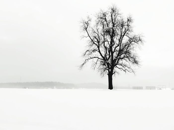 Shades Of Winter Tree Winter Bare Tree Fog Cold Temperature Landscape Snow