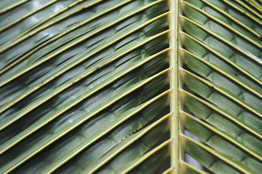 Palm Green Nature Simmetry Pattern Natural Pattern amazed at nature's perfection