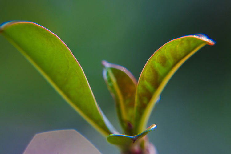 Leaves Green Color Leaf Plant Part Growth Plant Close-up Nature Beauty In Nature No People Focus On Foreground Fragility Vulnerability  Freshness Outdoors Day Flower Selective Focus Botany Flowering Plant New Life