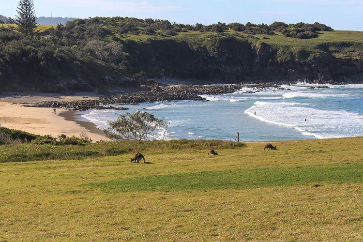Moonee Beach -