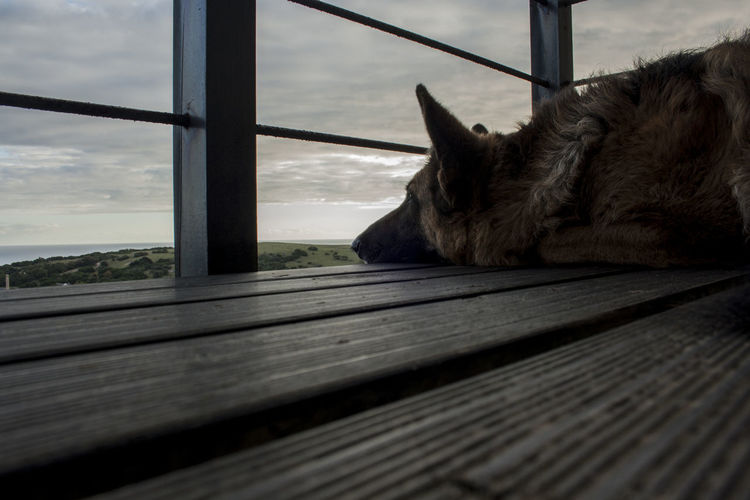 A dogs life. Alsatian Animal Themes Balcony Canine Close-up Day Dog Dog Love Dogs Dogs Of EyeEm Domestic Animals German Shepherd Lazy Looking To The Other Side Nature No People One Animal Pets Relaxation Sky Sunset View Wood