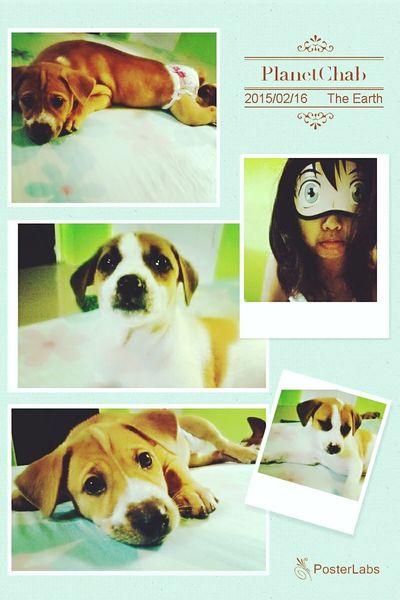 Magandang Buhay Folks! ^_^ Maya & Kisses Chab101 PlanetChab