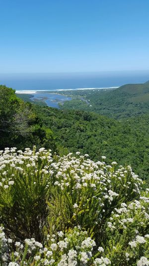 Green No Filter Beautiful Nature Photography Nature Ocean Coastline Mountains South Africa