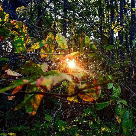 Nature Leaf Growth Sunlight Tree Beauty In Nature Outdoors No People Sun Close-up Sunbeam Day Plant Freshness Environment Plant Beauty In Nature Low Angle View Travel Mountain Nature Backgrounds Sunset Sunlight Sky