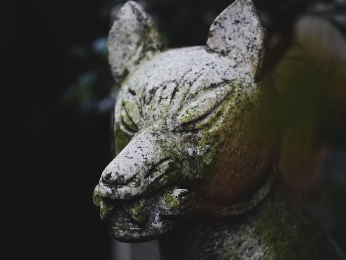 Komaninu Shrine Streetphotography Hanging Out Tokyo,Japan Mystery