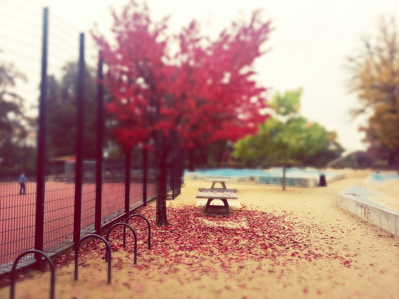Side view of bench empty by flower tree at park