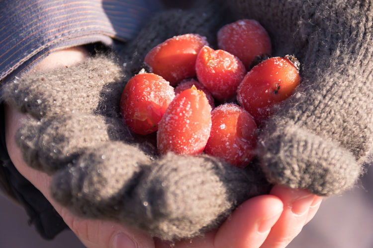 Adult Adults Only Close-up Day Food Food And Drink Freshness Frost Frozen Fruit Healthy Eating Human Body Part Human Hand One Person One Woman Only Only Women People Real People Rose Hip Rose Hips Cold Temperature Frozen Food