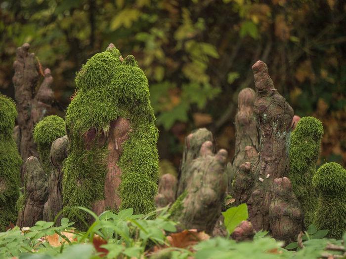 Arboretum Bald