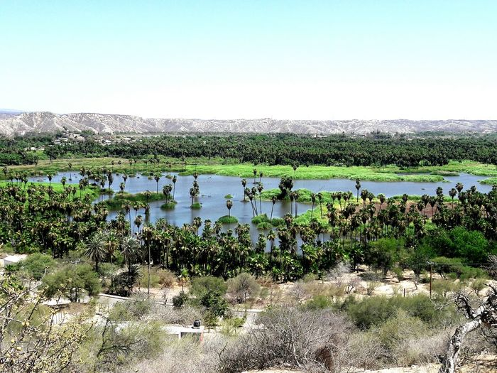 Santiago bcs. Relaxing Suun🌞 Caminando Water Lake Nature Reflection Landscape Social Issues Day Outdoors Clear Sky No People Sky Scenics Beauty In Nature Tree Natural Disaster Floating On Water