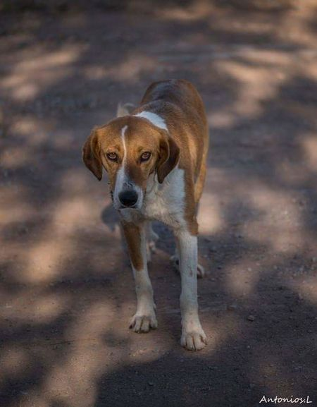 One Animal Mammal No People Pets Portrait Nature Dog