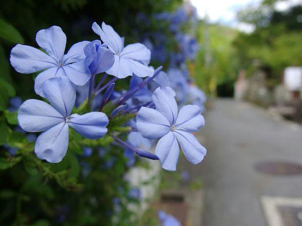 フラワー 花 植物 紫陽花
