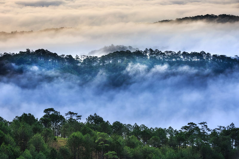 The magical beauty of the pine forests on the hill hidden in the early morning clouds at Da Lat town. Da Lat always is foggy town in the morning. Dalat is one of the most beautiful and the famous town in Viet Nam. Agriculture Beauty In Nature Cloud Cold DaLatcity Fanciful Farm Fogs Forest Greenhouse Lanscape Magic Morning Mountains Nature No People Outdoors Paradise Pine Tree Rain Scenic Scenics Sunrays Tropical Wild
