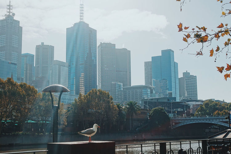 Seagull Perching On Retaining Wall In City Against Sky