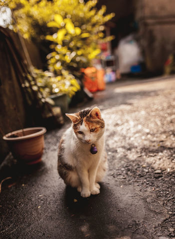 Lost in Houtong cat village, New Taipei City Animal Animal Themes Cat Village Day Domestic Animals Domestic Cat Feline Houtong Cat Village Looking At Camera Mammal New TaipeiCity No People One Animal Outdoors Pets Portrait Taipei Taiwan Young Animal