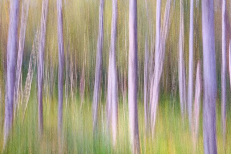 Full frame shot of multi colored grass