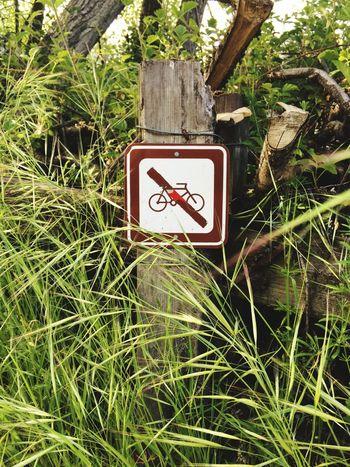 No Bikes Allowed No Bikes No Biking Signs Felton California United States Henry Cowell Redwoods State Park California State Parks