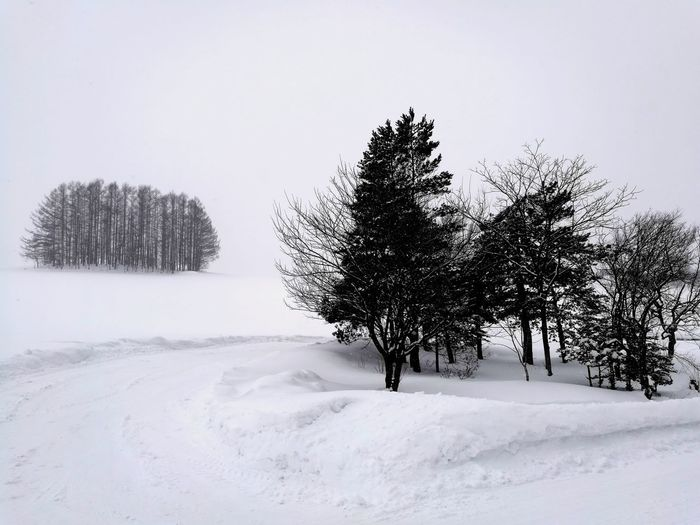 Countryside Country Road Business Finance And Industry Snow Covered Landscape Snowscape Blackandwhite White White Background Road Tree Snow Cold Temperature Winter Snowing Frozen Water Rural Scene Bare Tree Polar Climate Pine Tree Pine Woodland Frost Snowcapped Mountain Deep Snow Evergreen Tree