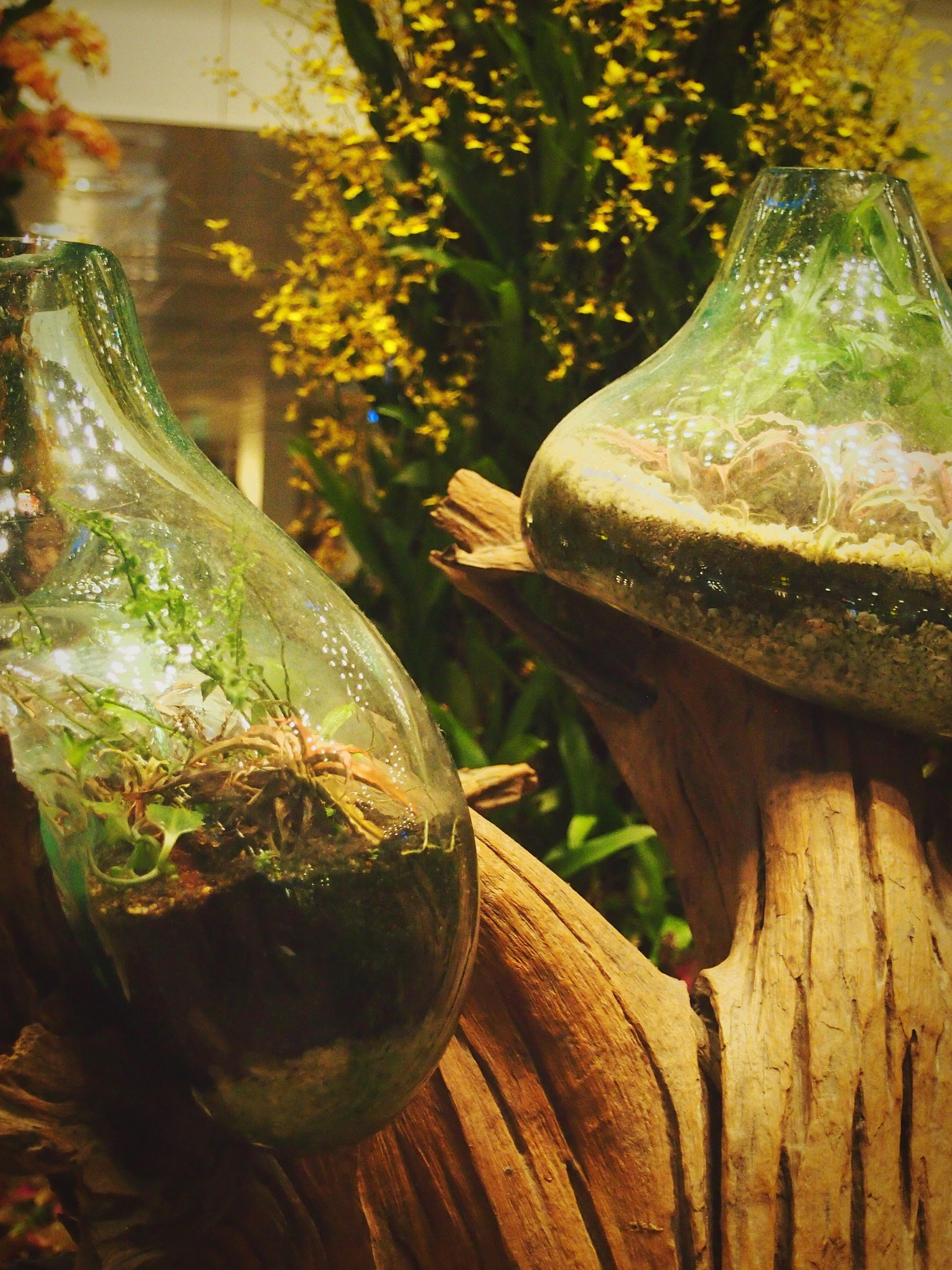 close-up, plant, growth, leaf, wood - material, focus on foreground, nature, no people, outdoors, day, green color, tree, sunlight, water, fountain, table, old, glass - material, potted plant