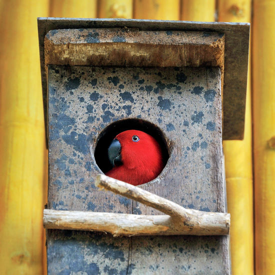 Close-up of bird perching on red pipe
