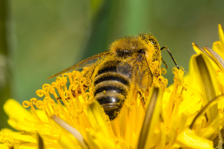 Bee on a Yellow