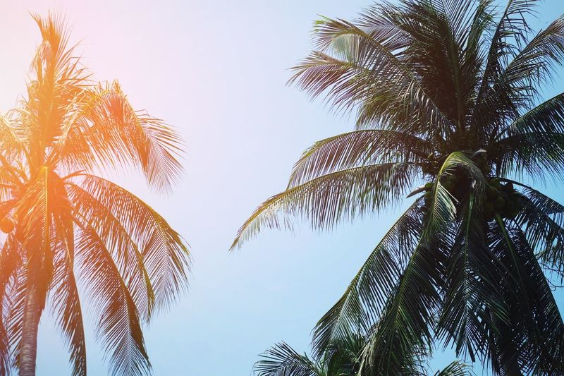 Coconut tree and blue sky Beautiful Destiny Destination Leaf Fresh Trip Happiness Happy Nature Tropical Paradise Outdoor Vacation Relax Beach Season  Summer Travel Palm Leaf Sunlight Environment Tree Plant Sky