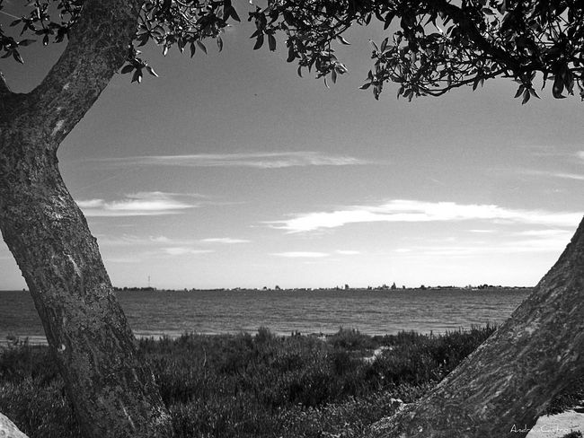 Hugging A Tree Sea View Sea_collection Sea And Sky Shades Of Grey EyeEm Best Shots - Trees Tree_collection  Monocrome Design Black And White EyeEm Best Shots - Black + White Black And White Collection