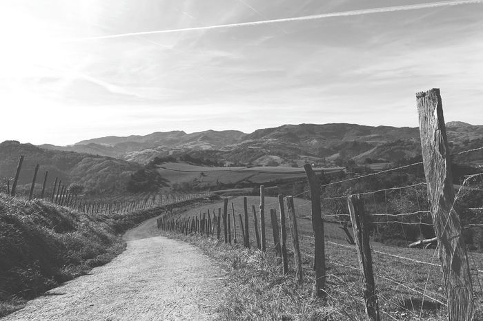 Countryside Wanderlust Tranquility Tranquil Scene Calm Peaceful Peace And Quiet Basque Country Idyllic Idyllic Scenery Bnw B&w Blackandwhite Black And White Black & White Footpath Pathway Camino CaminodeSantiago Pilgrimage Rural Scene Agriculture Field Sky Landscape Fence Barbed Wire Vineyard Wooden Post Vine