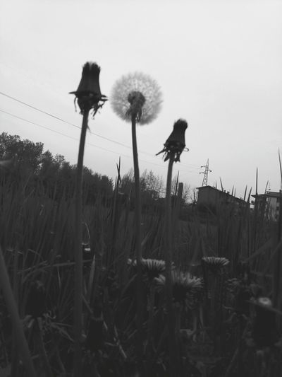 Perspective Sizedoesntmatter Low Angle View Blackandwhite Photography Nature_collection