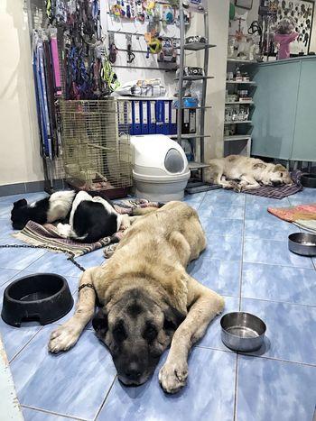 TBT  Dog Pak  Dost Pets
