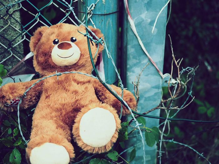 Close-up of teddy bear on fence