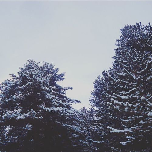 Snow Covered Forest Scenery Trees Naturelovers Escapereality Simple Photography Nature Photography Winter Snow Winter Wonderland Gray Sky Beautiful Simplethings
