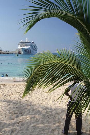 Cruseship in Ocho Rios (Jamaica) Caribbean Sea Ocho Rios Palm Port Of Call West Indies Cruseship Jamaica Ship Ships