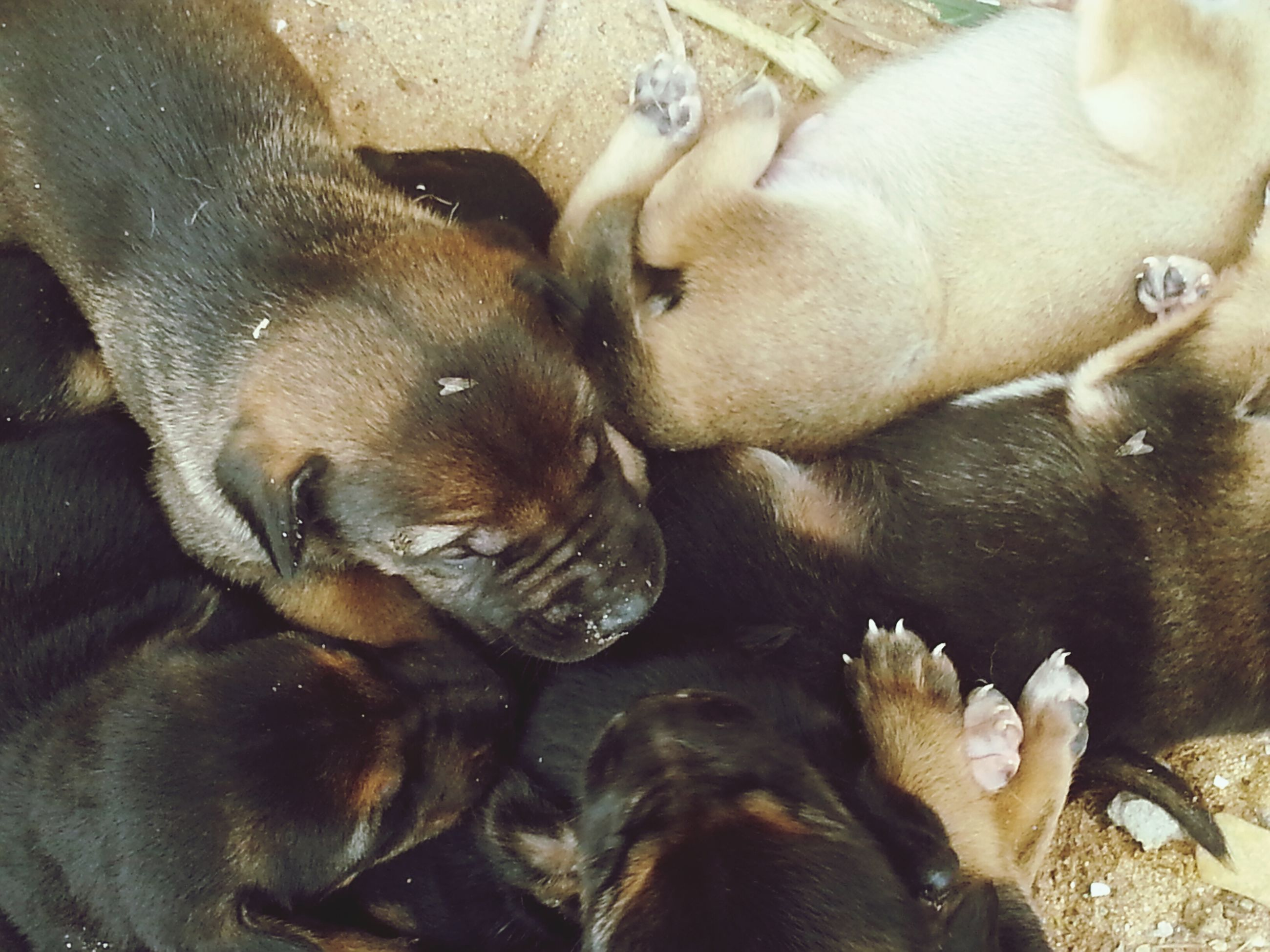 animal themes, mammal, domestic animals, pets, dog, two animals, one animal, high angle view, togetherness, young animal, animal family, three animals, animals in the wild, relaxation, wildlife, day, no people, nature, resting, outdoors