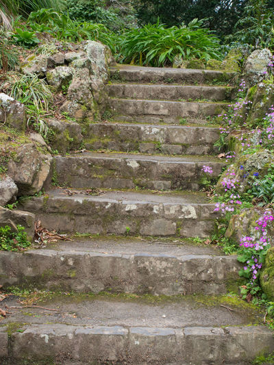 Concrete garden steps Concrete Steps Garden Garden Photography Garden Steps Outdoors Staircase Steps Steps And Staircases Stone Material