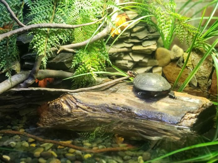 Water Tree Branch Moss Rock - Object Close-up Plant Green Color Grass Reptile Turtle Tiny Pebble