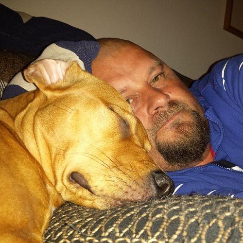 Softar i soffan :) Love Pitbullinstagram Instapit Instadog pitty dontbullymypitbull dog doglove halmstad halland pitbullterrier