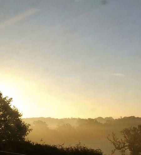 out the train Photowalktheworld EyeEm Selects Morning Light Tree Sunset Fog Forest Dawn Multi Colored Sunlight Morning Sky Landscape Treetop Foggy Atmospheric Mood Dramatic Sky Long Shadow - Shadow