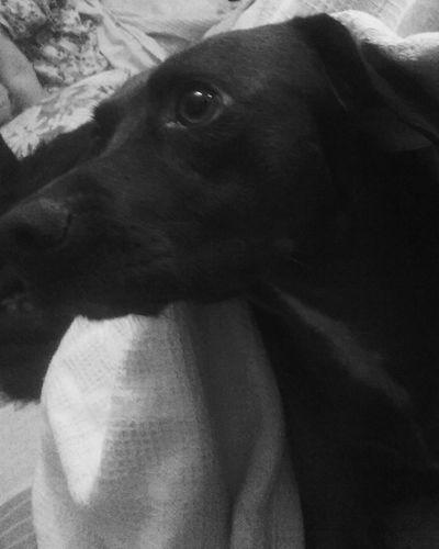 Dog frightened eyes Eyes Pets Dog Close-up Argentina Black & White Blackandwhite Scare Cowardly Dog
