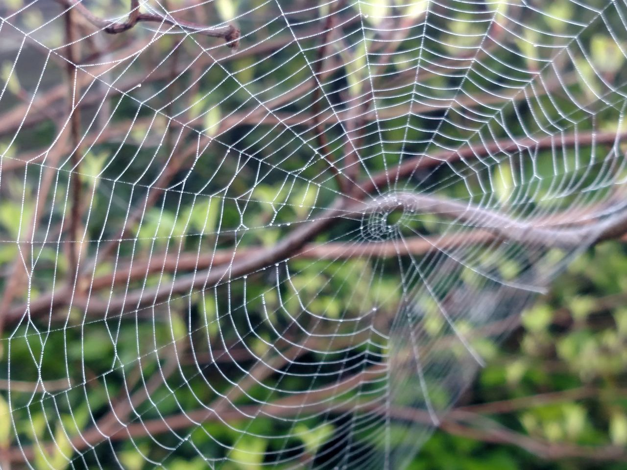 spider web, web, spider, nature, spinning, focus on foreground, outdoors, close-up, no people, fragility, beauty in nature, survival, intricacy, day, trapped, animal themes, freshness