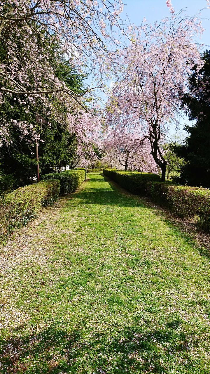 tree, grass, growth, nature, beauty in nature, tranquility, tranquil scene, no people, green color, day, scenics, sunlight, outdoors, flower, landscape, shadow, sky, freshness
