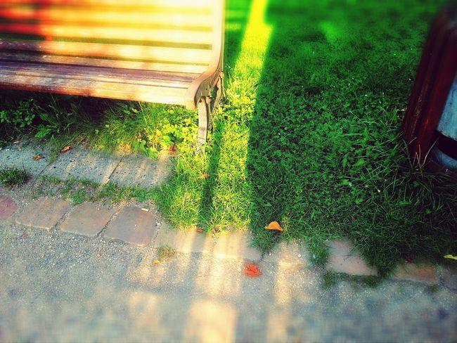 Schatten Herbstanfang Nelly Sachs Park Shadow