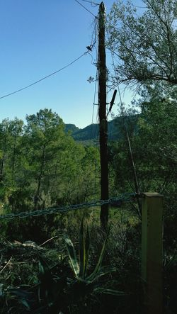 Tree Nature Mi Dia A Dia Working Day Naturaleza🌾🌿 My Working Day Natural Telecommunications Technician Everydays Internet Connection Poste