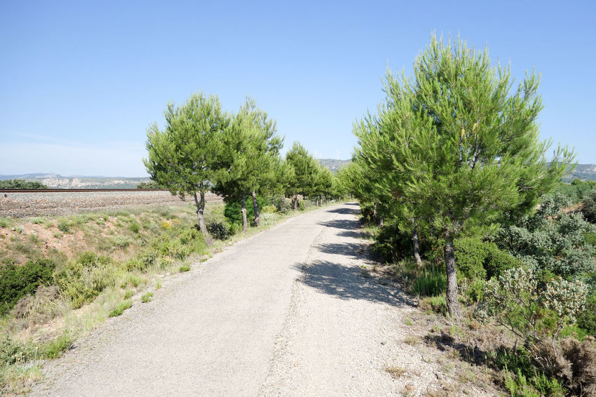 Bike Castellón Clear Sky Cycling Day Green Way Landscape Nature Nature No People Outdoors Plant Road Sky SPAIN The Way Forward Tree València