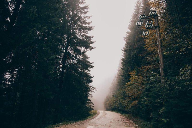 EyeEm Selects nature fog
