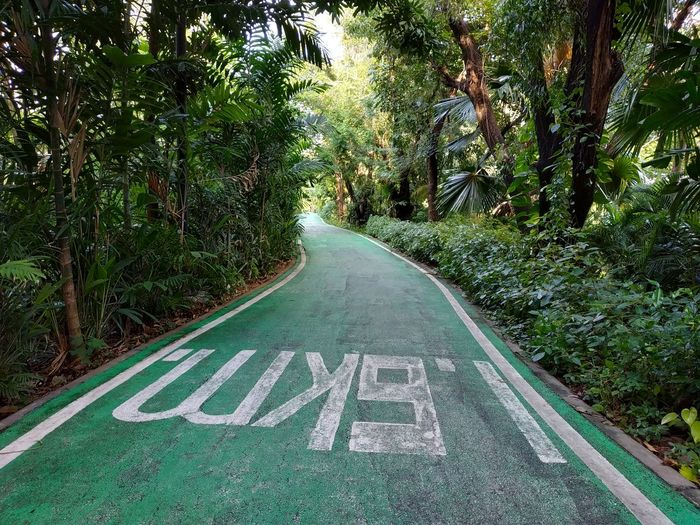 biker Tree Road Communication Text Guidance High Angle View Bicycle Lane Capital Letter Road Sign Speed Limit Sign Warning Growing Information Road Marking Information Sign Western Script Blooming Arrow Sign One Way Directional Sign Traffic Arrow Sign Do Not Enter Sign Signboard