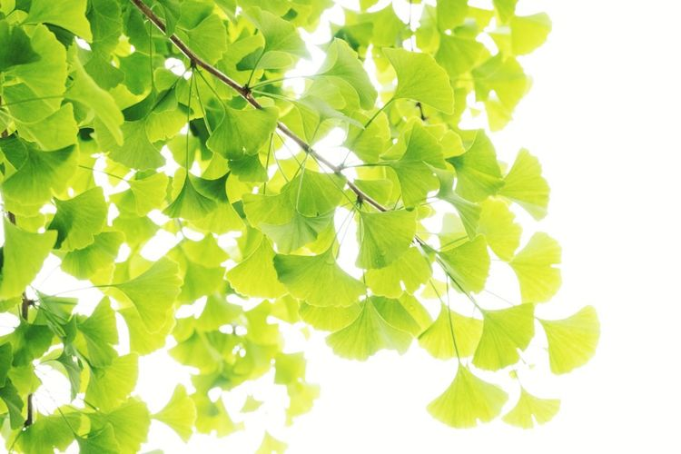 Close-up of green leaves on white background