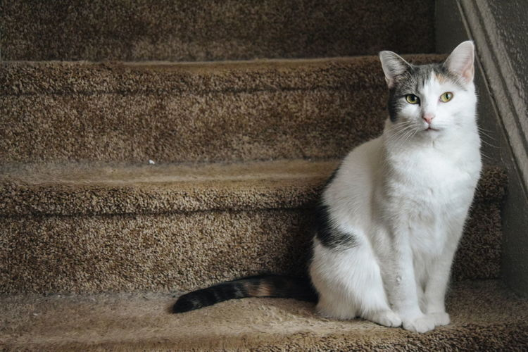 Portrait of cat sitting on staircase