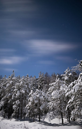 Nightphotography Long Exposure Landscape Photography Beuty Of Nature Moonlight Sky Star - Space Winter Trees Snowing Snow Cold Temperature Mountain Winter Snowflake Polar Climate Rural Scene Snowcapped Mountain Blizzard Constellation